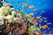 Coral Reefs are vital to the planet